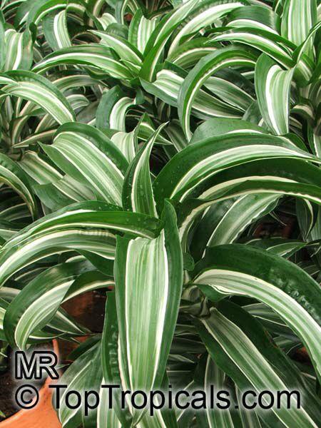 Tropical House Plants Sale