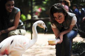 No Parque das Aves, a experiência Bastidores permite interagir e alimentar os animais