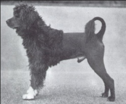 Leao-in-Lion-Trim