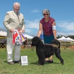 BOB at the Portuguese Water Dog Club of Northern California Supported Entry under judge Dr. Carmen Battaglia