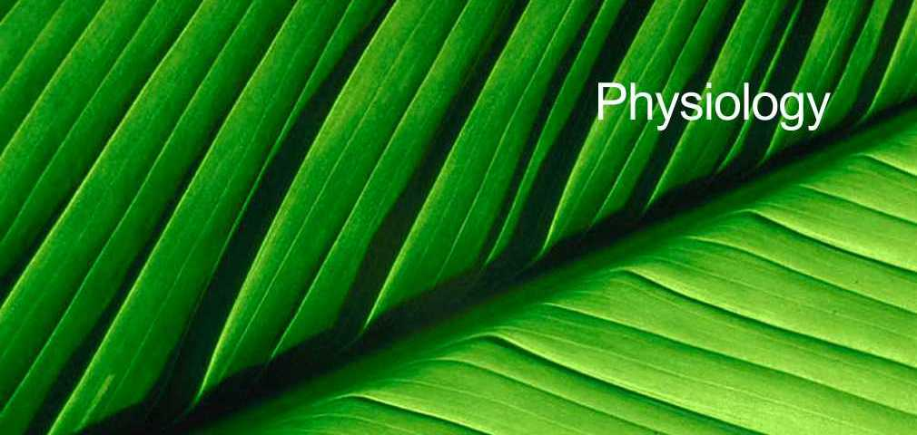 Physiology | Acupuncture Clinic Torquay, Paignton, Brixham.
