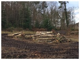 Larch clearance