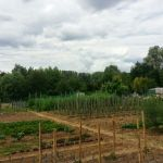 Allotment garden near Macon
