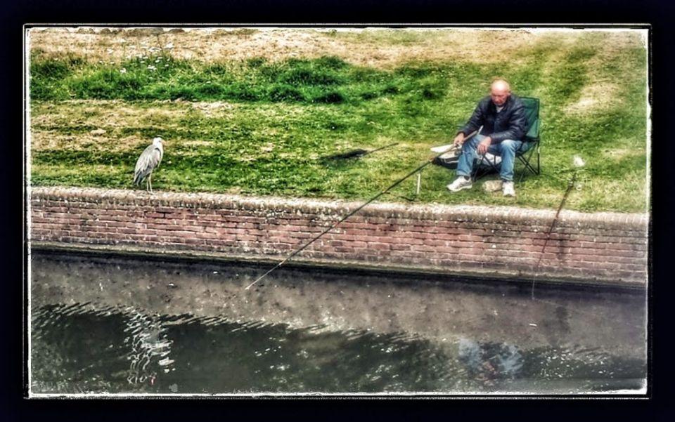 heron waiting for fish in amsterdam