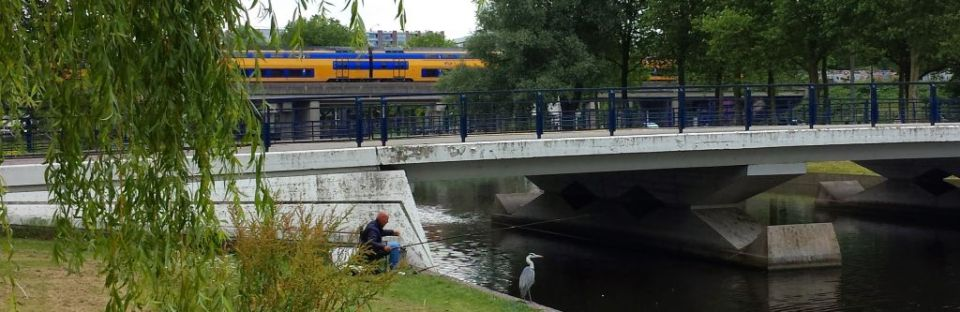 heron waiting for fish in amsterdam