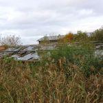 Nature taking over in Aalsmeer