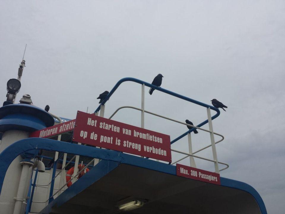 Velsen Ferry with birds