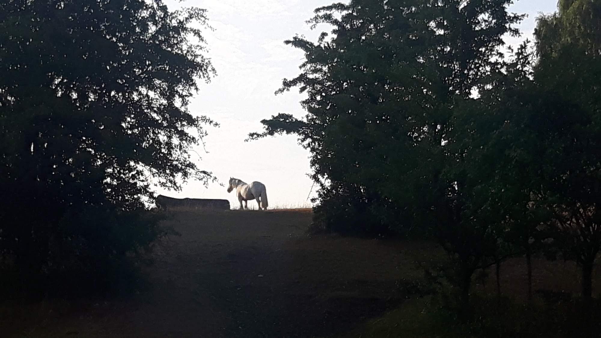 A horse in Denmark