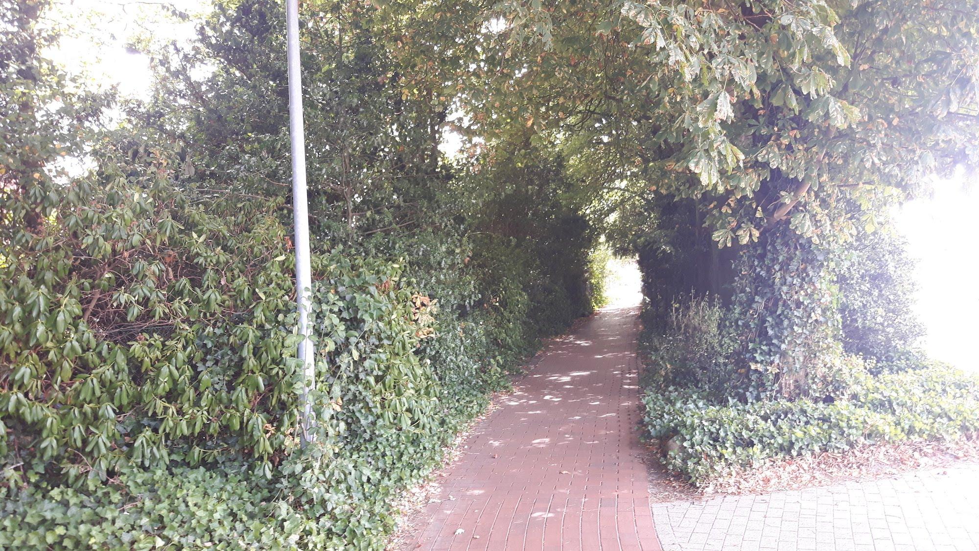 Bike Path Near Cloppenburg Germany