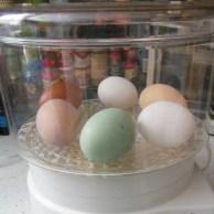 Eggs in the steamer