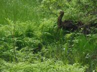 Swamp critter 3