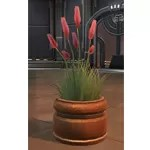 Potted Plant: Weed Flowers