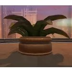 Potted Plant: Large Fern