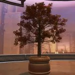 Potted Tree: Autumn