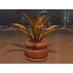 Planter: Blood Razor Fern