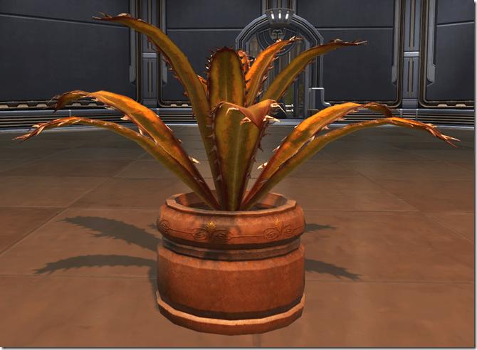 Planter Blood Razor Fern