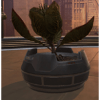 Potted Plant: Blooming Bud
