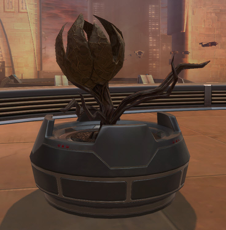 swtor-potted-plant-lifeless-bud