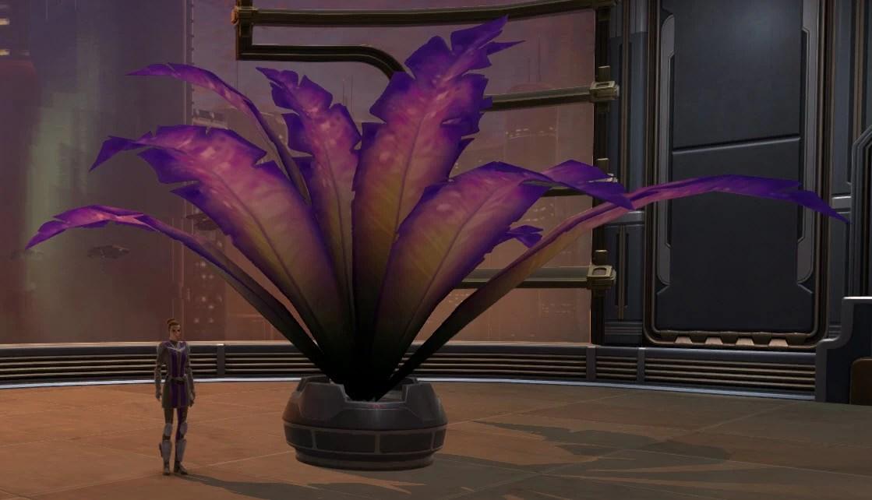 potted-plant-violet-fern-2