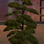 Nathema Plant