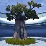 Dantooine Tree (Large)