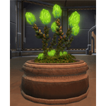 Planter: Glowing Plague Bulbs
