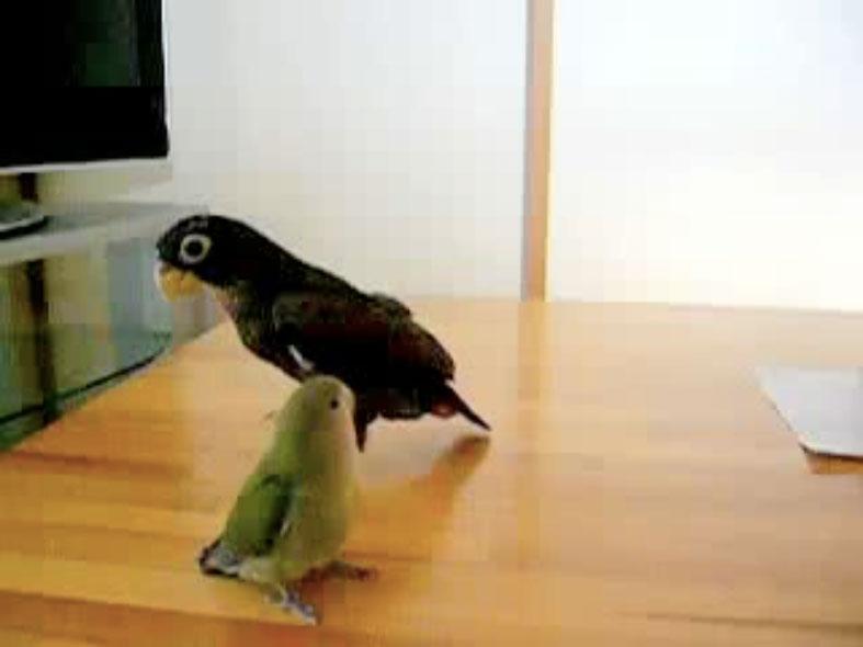 Parrots01