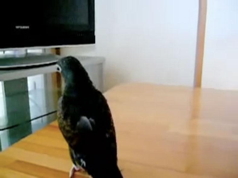 Parrots03