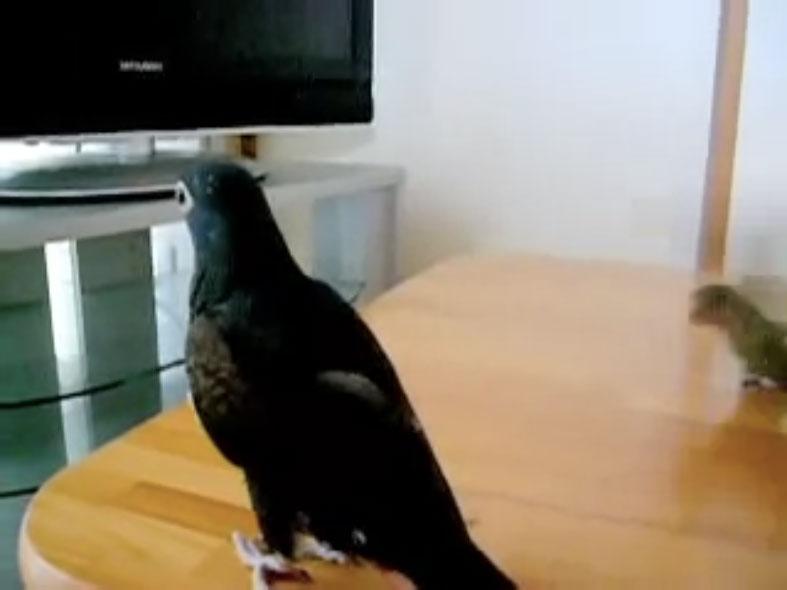 Parrots04