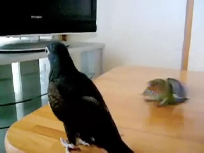 Parrots05