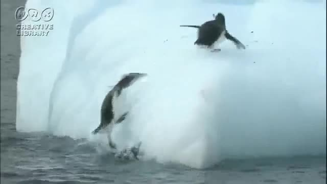 Penguin-Fail06