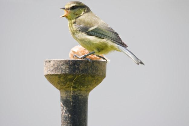 Screaming Birds04