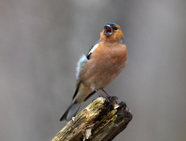 Screaming Birds05