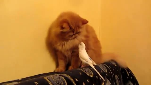 parakeet-and-cat01
