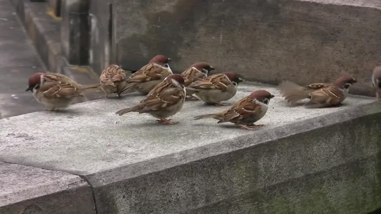 sparrow01