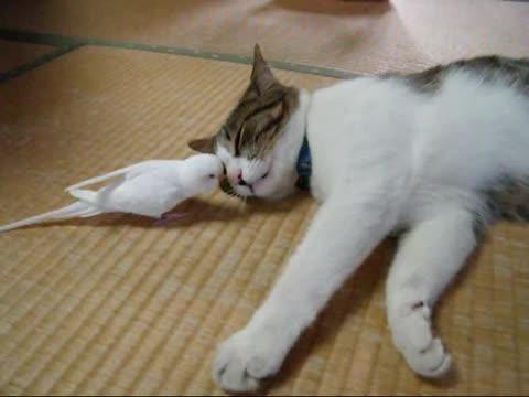 ネコさん!ネコさん!