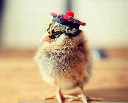 スコットランドの民族帽子……ちょっと不機嫌?
