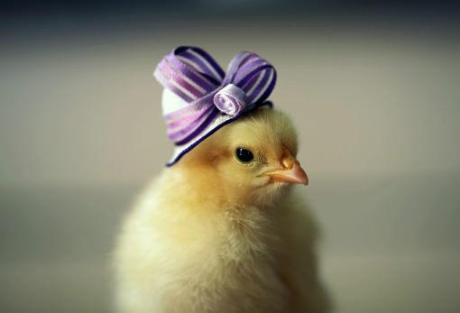 飾り帽子で淑女に