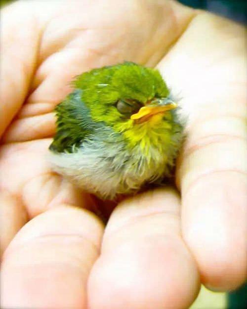 まんまるな鳥の写真14枚!009