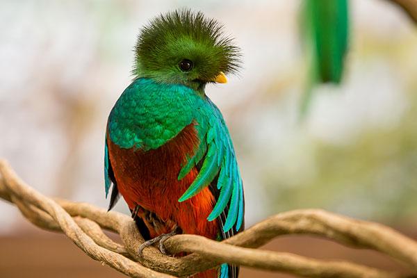 06-quetzal