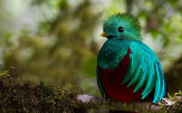 08-quetzal