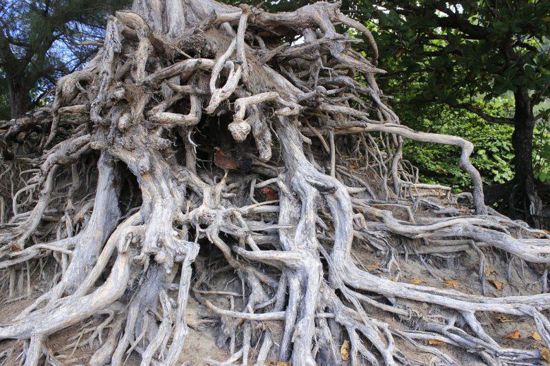 Jenis jenis akar