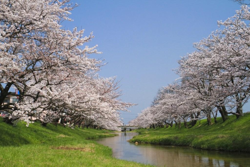【2020年】島根県のお花見イベント|桜ライトアップ・お祭り総まとめ