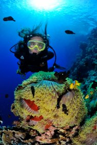Diver and Anemone 3 (681x1024)