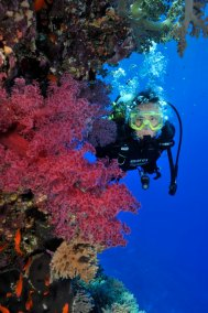 Diver and Soft Coral 3 (681x1024)