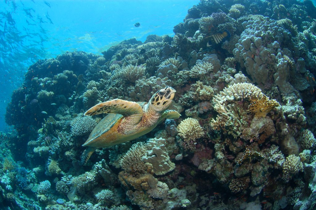 Northern Red Sea