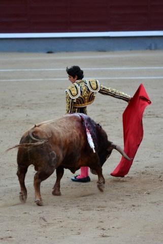Sébastien Castella Toro Alcurrucen Madrid 20052016 Photo © Ferdinand DE MARCHI