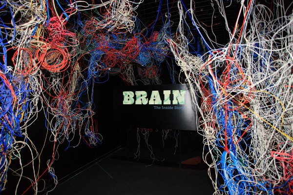 An inside look at the brain at Ontario Science Centre ...