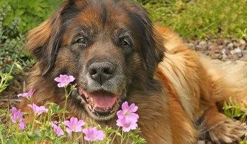 dogs_flickr_nutmeg66