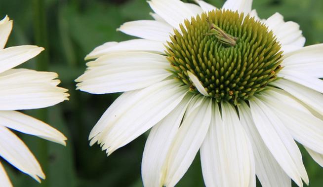garden-closeup-6